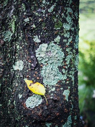 a leaf on the tree trunk