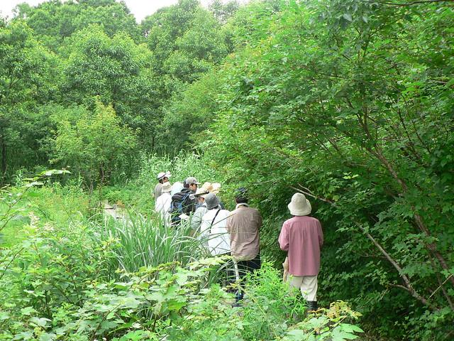 木道にはいり,湿原の土壌についての話.湿原には長い長い歴史がある.