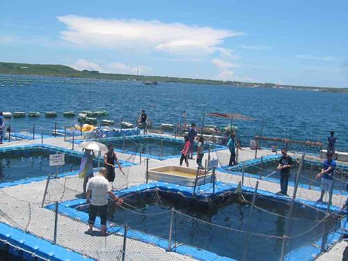 13-2013澎湖-海洋牧場-垂釣體驗