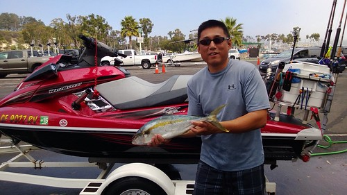 first yellowtail