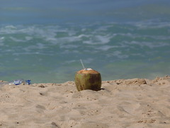 Lonely Coconut
