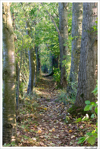 autumn tree nature forest 35mm landscape deutschland thüringen herbst natur mm 35 landschaft wald baum eichsfeld afsdxnikkor35mmf18g kleinbartloff