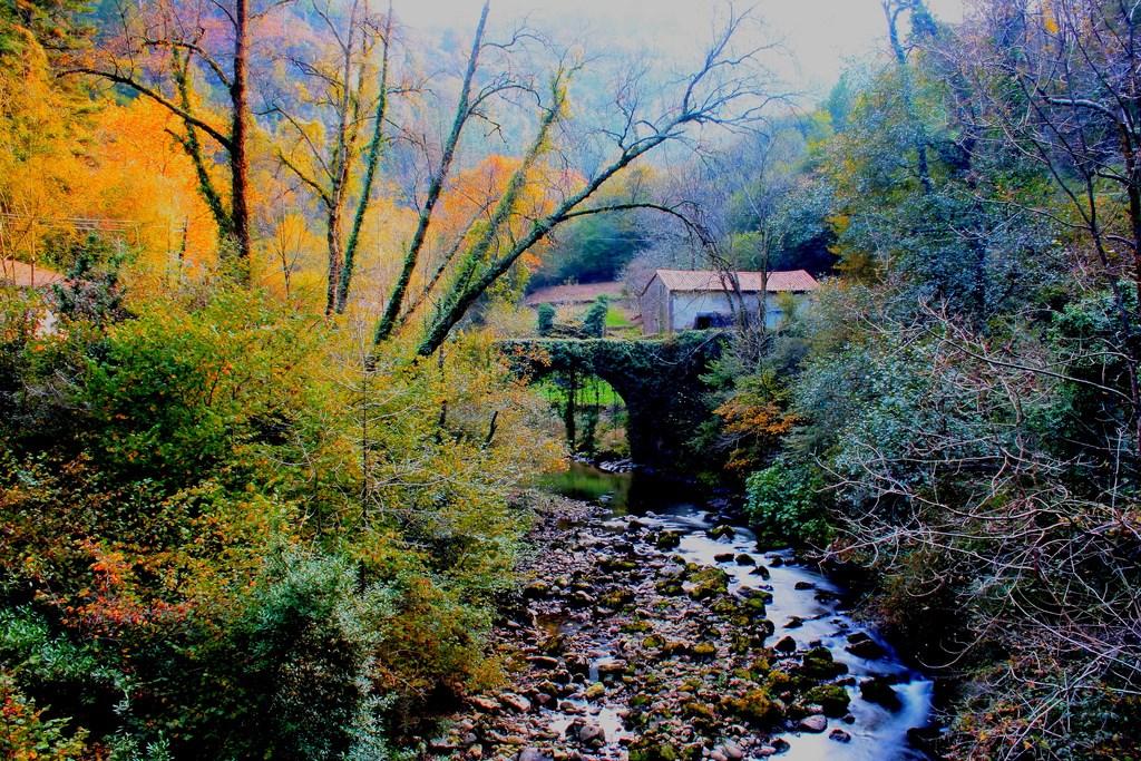 6. Dorados junto al río. Autor, d'Antela
