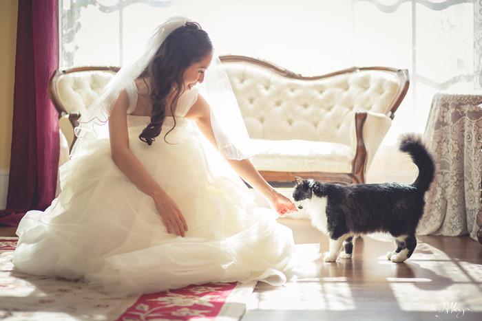 Bride-Cat