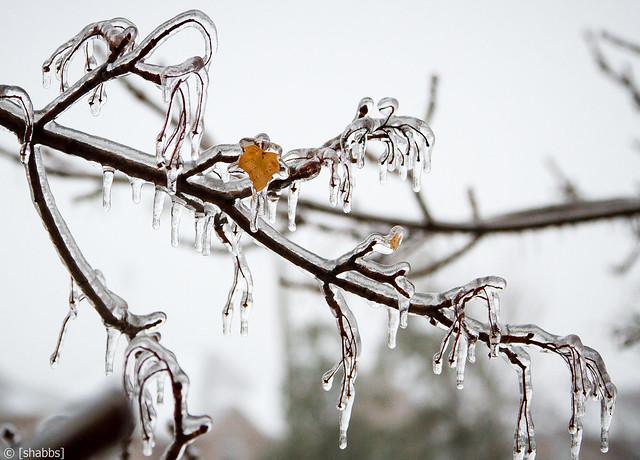 Ice Storm 2013 11479809276_33d7888951_z