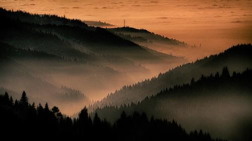 tree night forest day olympus soul omd em5 culiac