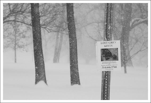 Big Snow 2014-01-05 7