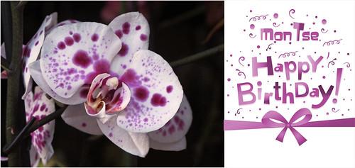 Feliz cumpleaños ♫♪♥ Montse.....