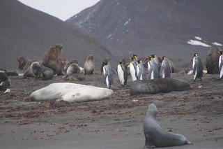 181 Zeeberen, zeeolifanten en koningspinguins