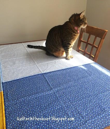 helper cat, basting