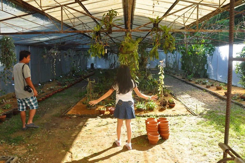 Asclepiadarium and Orchidarium