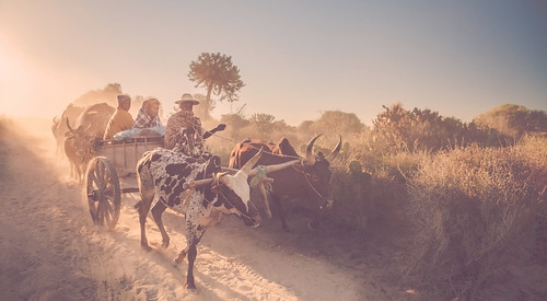 sunrise dust madagascar piste zebu photographe poussière explored cyrilblanchard