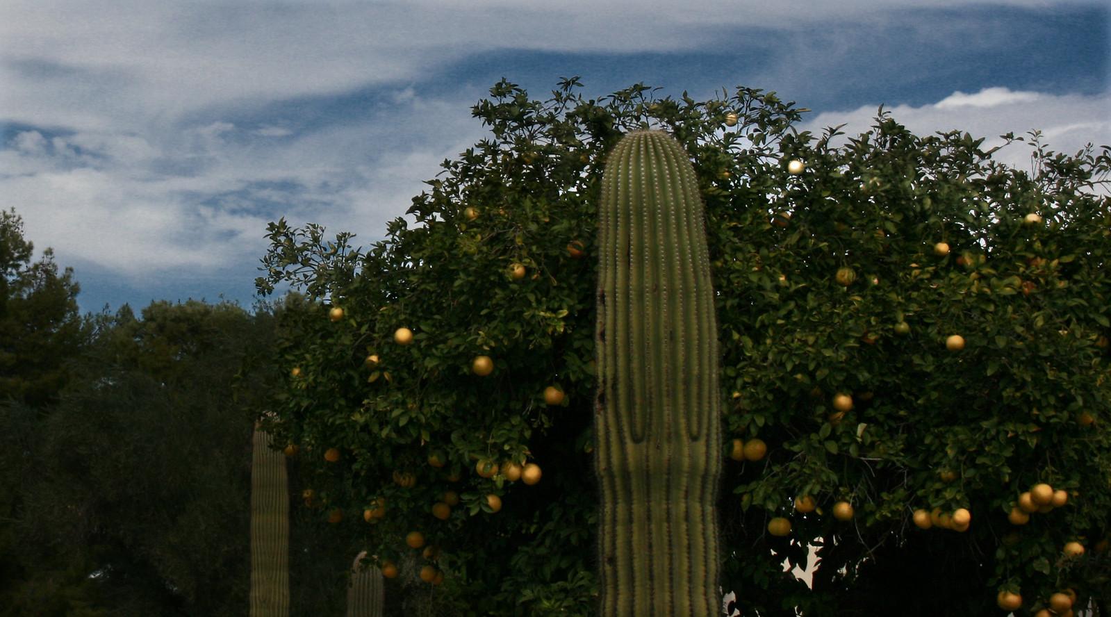 palmcactusoranges