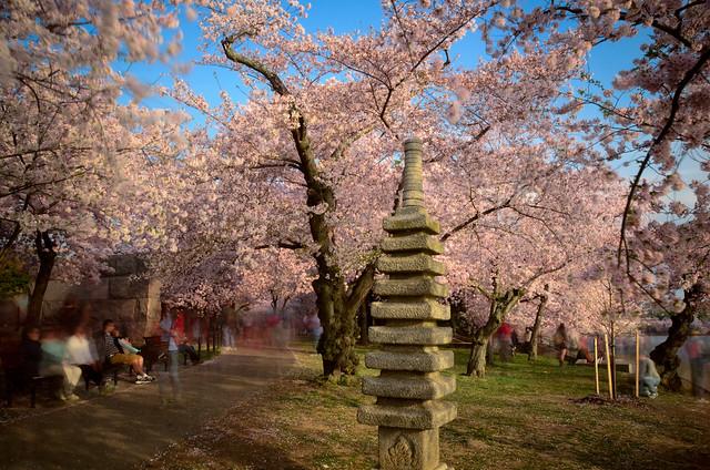 Cherry Blossom Pagoda