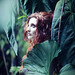 Eva Prima Pandora by {E}mma