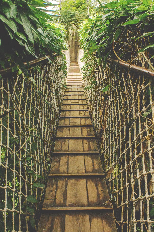 Brücke in den Urwald