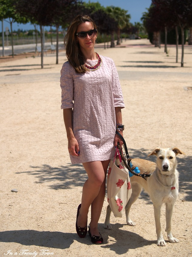 OUTFIT CATS AND DOGS