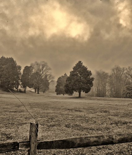 trees winter mist nature fog clouds fence annapolis