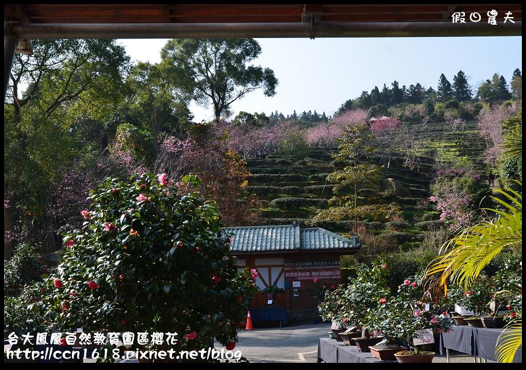 台大鳳凰自然教育園區櫻花DSC_6141