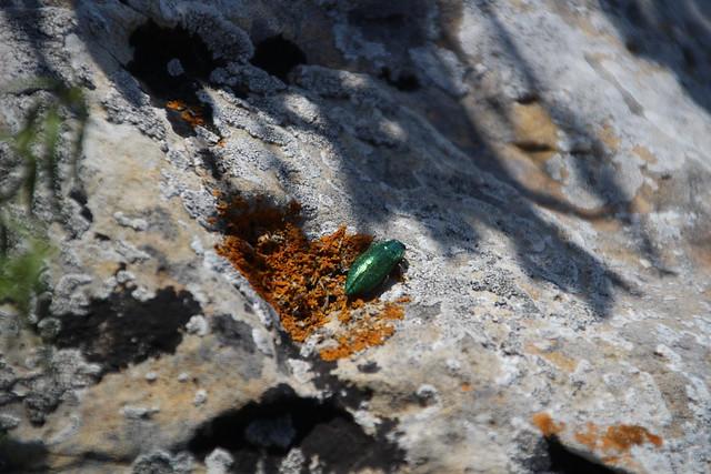 Insetto verde