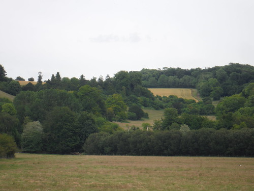 Michelmersh Wood, from Test Meadows