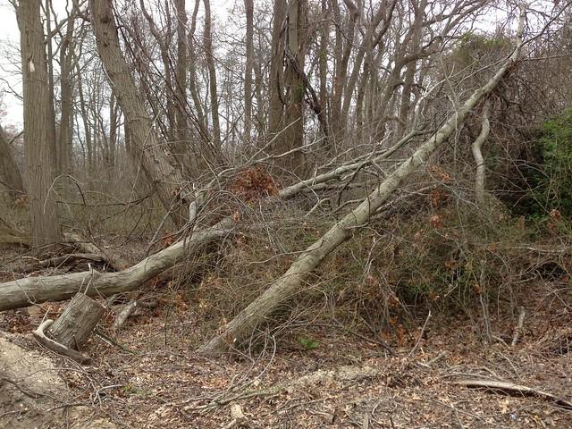 Gardiners County Park Long Island