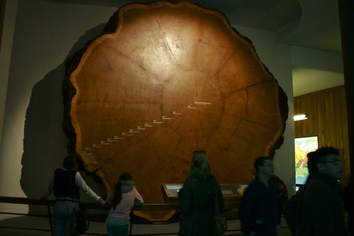 5.11 - One Big Tree