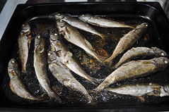 mackerel(0.0), cod(0.0), pacific saury(0.0), sauries(0.0), forage fish(0.0), bonito(0.0), capelin(0.0), sardine(0.0), animal(1.0), fish(1.0), fish(1.0), seafood(1.0), oily fish(1.0), food(1.0), shishamo(1.0), milkfish(1.0),