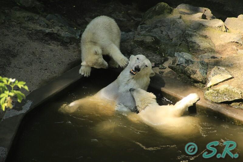 zoo bryno