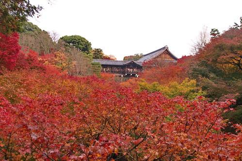 【写真】2012 紅葉 : 東福寺(2)/2017-11-27/IMGP7155