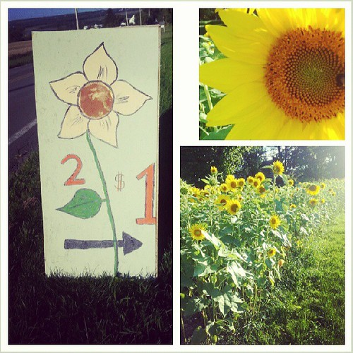 Our kids are open for business! Gorgeous sunflowers 2/$1. Can't beat that deal. :)