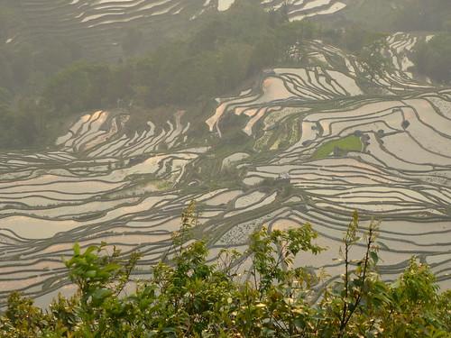 Yunnan13-Yuanyang 24-Bada (51)