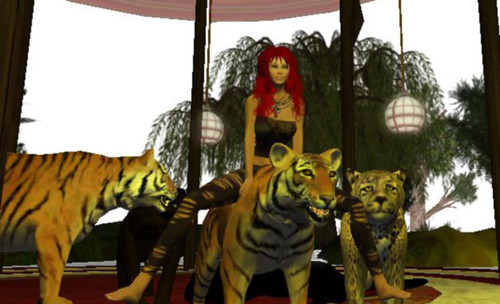 catlady_taming_the_tigers