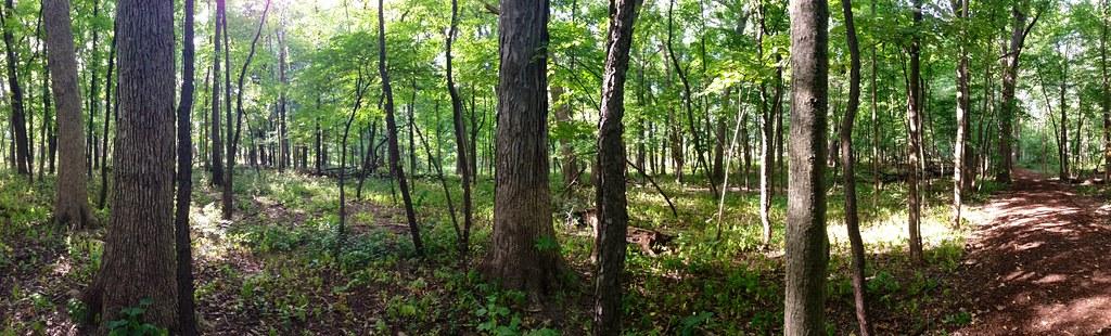 Restoring an oak savannah at Morton Arboretum