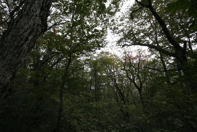 紅葉にはまだまだ早い.雨が少なかったせいか,キノコも多くはなかった.