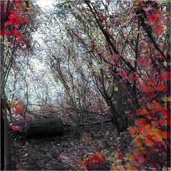 Autumn Artistry