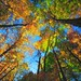 look up at autumn leaves by -liyen-