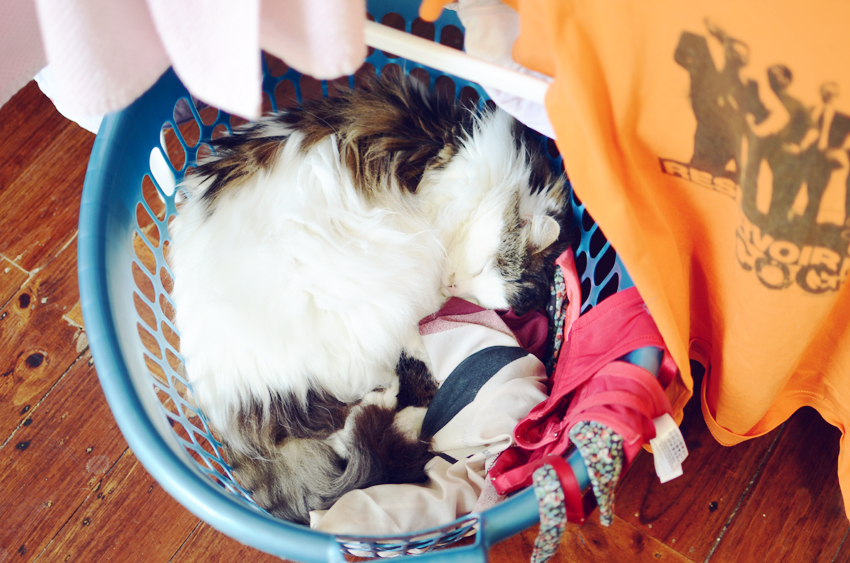babycat-laundry-basket