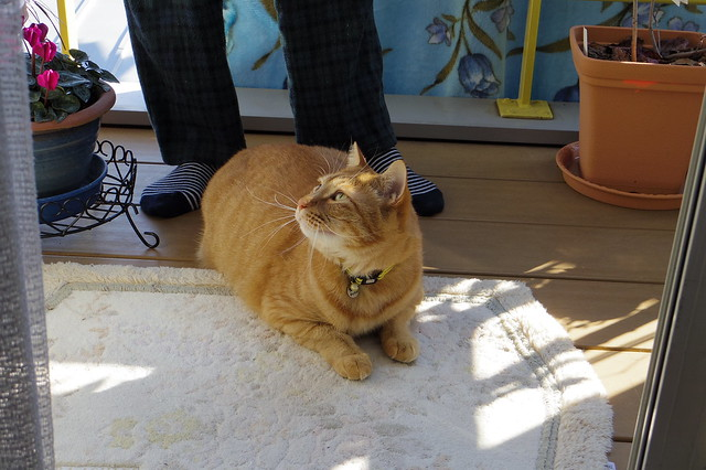 横を見るUNI cat