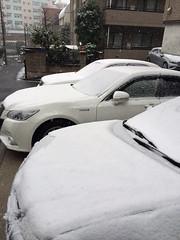 2014年2月14日の雪 - 朝の9時前