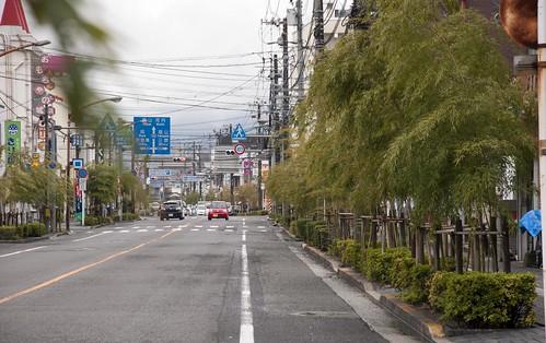 街路樹も竹