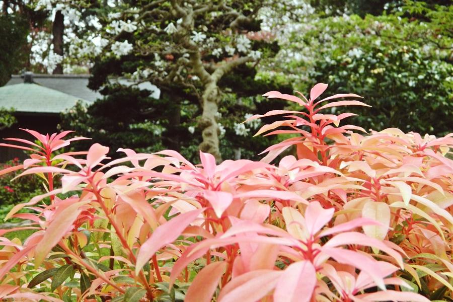 Jardin japonais Albert Kahn (9)