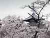 Photo:20140408_003  Ninnaji-Temple, Kyoto, JP By peter-rabbit