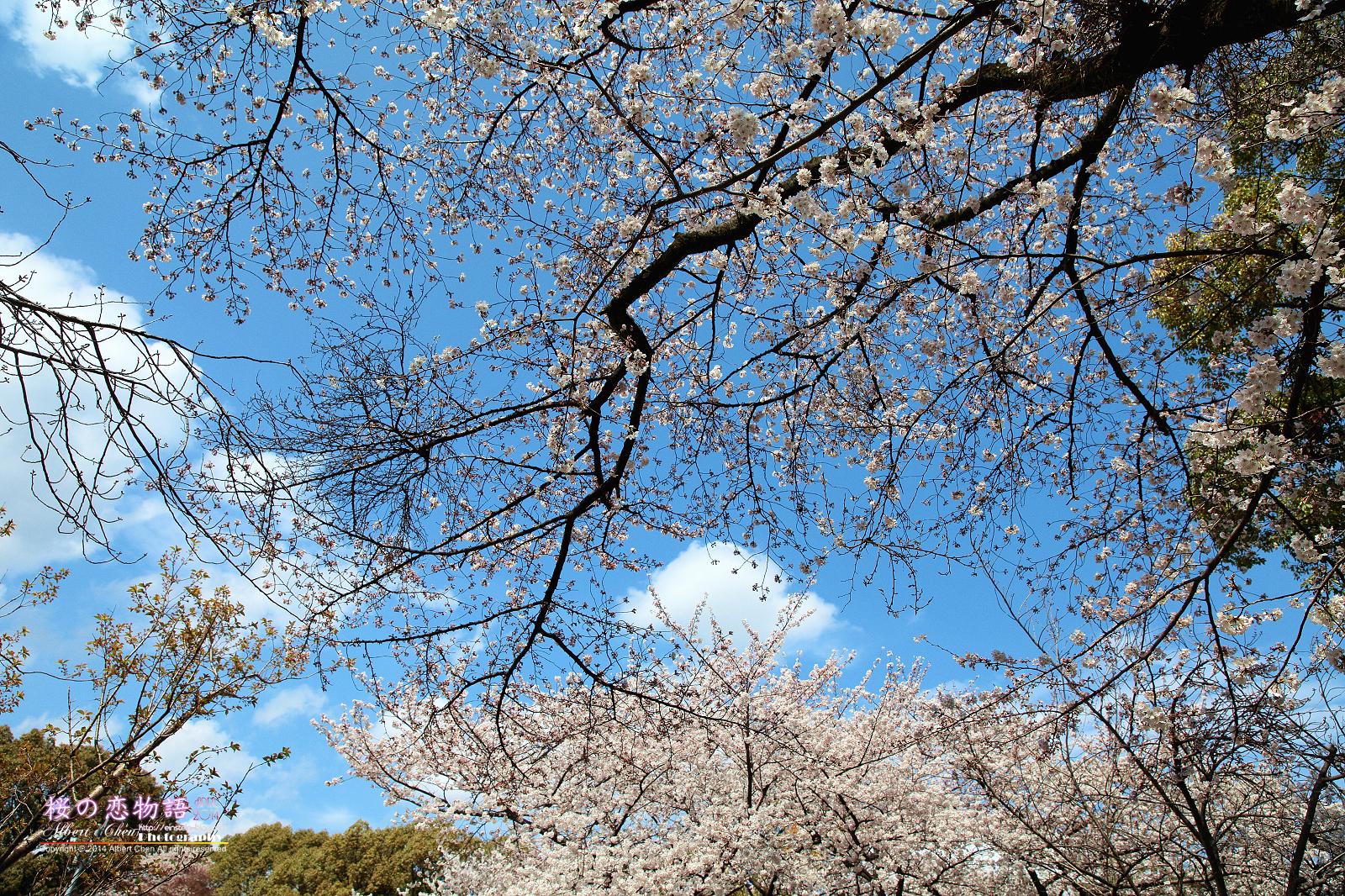 2014-04-02 13.54.06IMG_2514