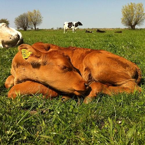 Så skönt att sova i solen!