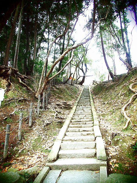 神龍社へ続く階段。息切れ必須