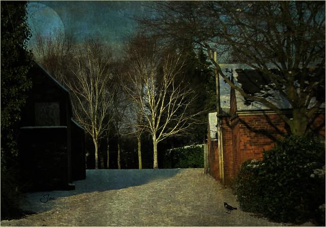 Winter Moon (Explored), Canon DIGITAL IXUS 990 IS