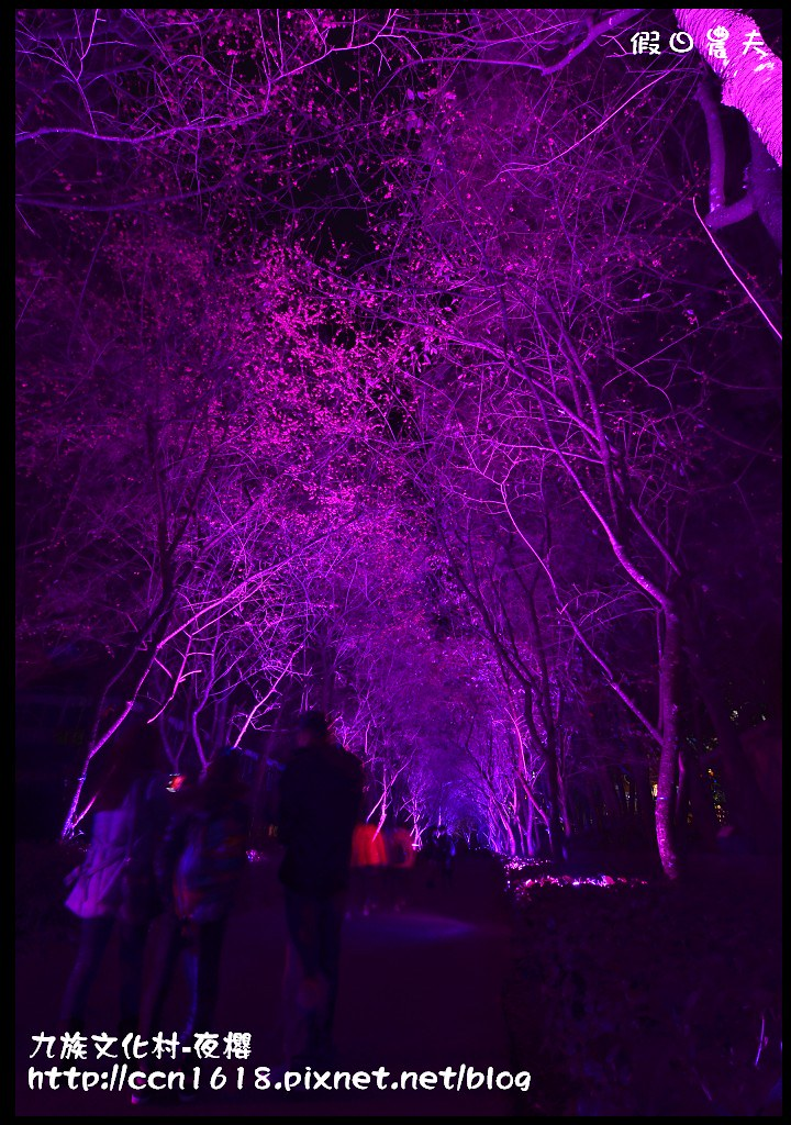 九族文化村-夜櫻DSC_5072