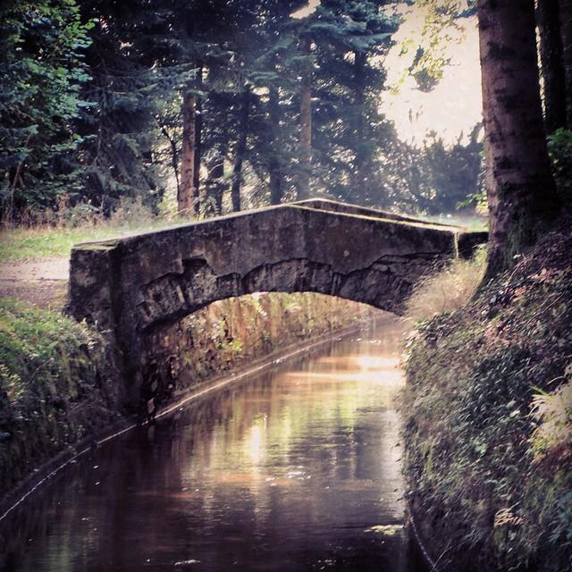 Pretty Forest Bridge