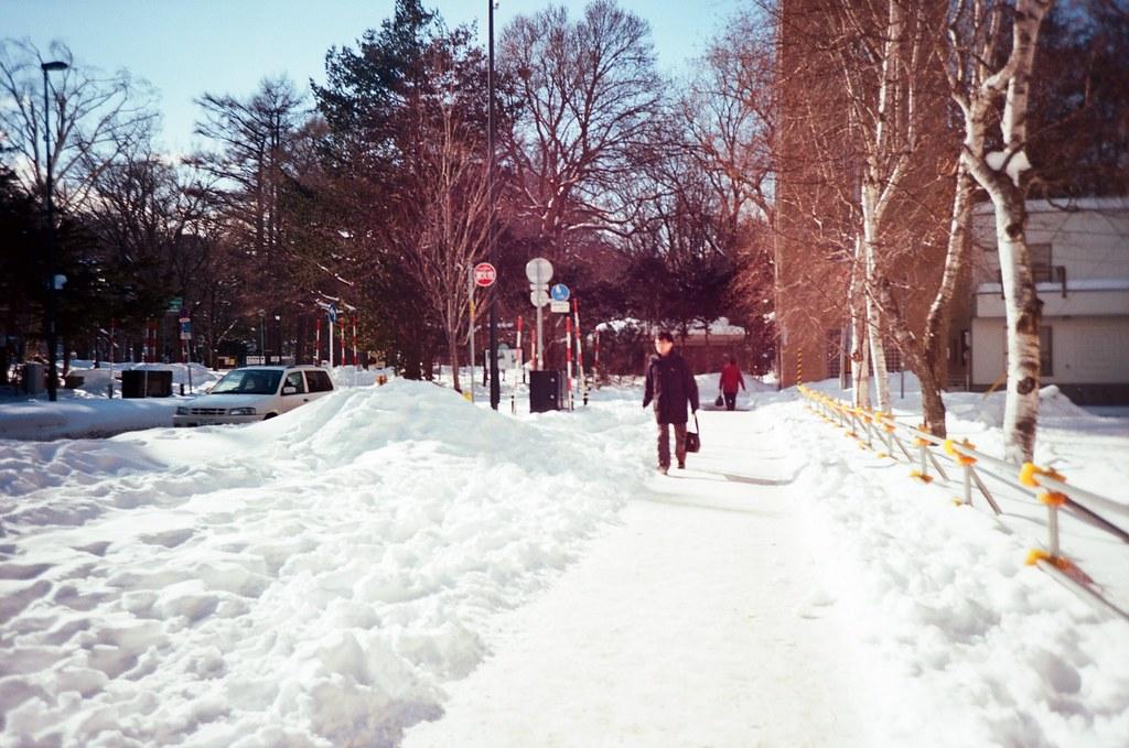 北海道大學 札幌 北海道 Sapporo, Japan / Kodak Pro Ektar / Lomo LC-A+ 畫面變成一點點紫色,不知道是什麼原因造成的。  有點想不起來這是在北海道神宮的哪個確切的位置。  Lomo LC-A+ Kodak Pro Ektar 100 8267-0019 2016-01-31 ~ 2016-02-02 Photo by Toomore